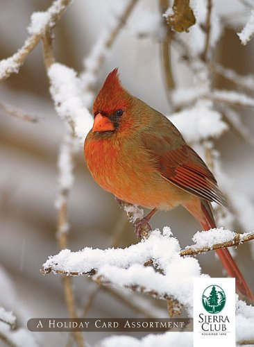 Birds in Winter Holiday Cards
